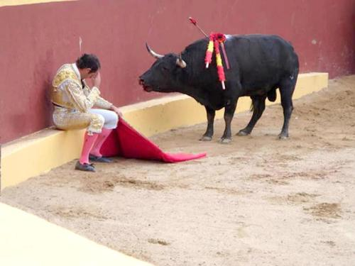 "This incredible photo marks the end of Matador Torero Alvaro Munera's career. He collapsed in remorse mid-fight when he realized he was having to prompt this otherwise gentle beast to fight. He went on to become an avid opponent of bullfights. (The look on this bull's face says it all for me. Even grievously wounded by picadors, he did not attack this man.)Torrero Munera is quoted as saying of this moment: ""And suddenly, I looked at the bull. He had this innocence that all animals have in their eyes, and he looked at me with this pleading. It was like a cry for justice, deep down inside of me. I describe it as being like a prayer - because if one confesses, it is hoped, that one is forgiven. I felt like the worst shit on earth."" ""Cows are amongst the gentlest of breathing creatures; none show more passionate tenderness to their young when deprived of them; and, in short, I am not ashamed to profess a deep love for these quiet creatures."""
