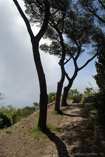 Capri, ItalyThis was taken on top of a mountain, and those are clouds next to the trees.
