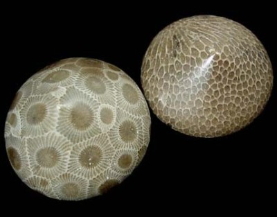 What I imagine real-life dragon eggs would look like:   Petoskey Stones, the state stone of Michigan, are fossilized coral resulting from glaciation and are often polished to reveal the beautiful pattern of the 6 sided coral colonies.