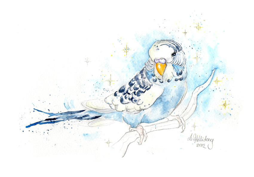 Merlin the young budgie, a recent pet portrait commission!
