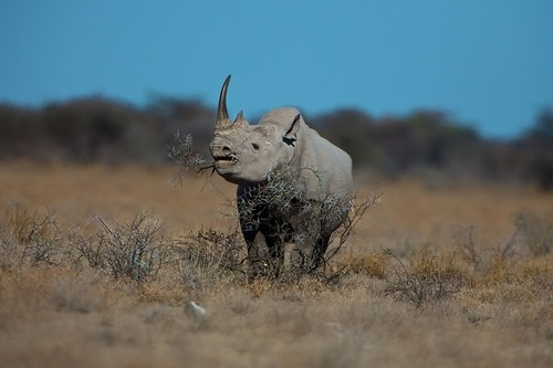 "earth-song:  ""Namibian Blackie"" by Buck Shreck"