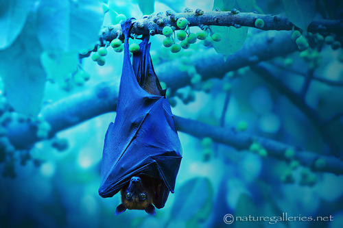 "earth-song:  ""Bat in Night."" by Sasi - smit"