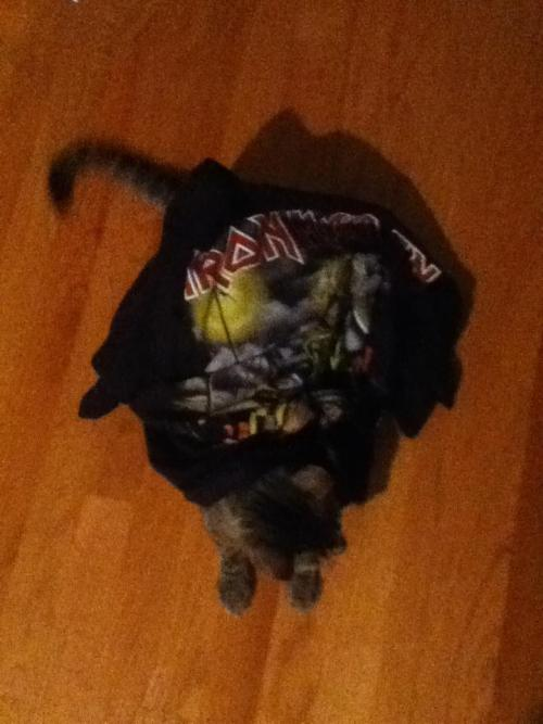 get out of the cat. you can't even name any Iron Maiden albums or members.