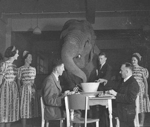 maudelynn:  The Elephant's Tea Party by Sam Hood c.1939  Elephant's tea party, Robur Tea Room, Sydney, 24 March 1939 / Sam Hood