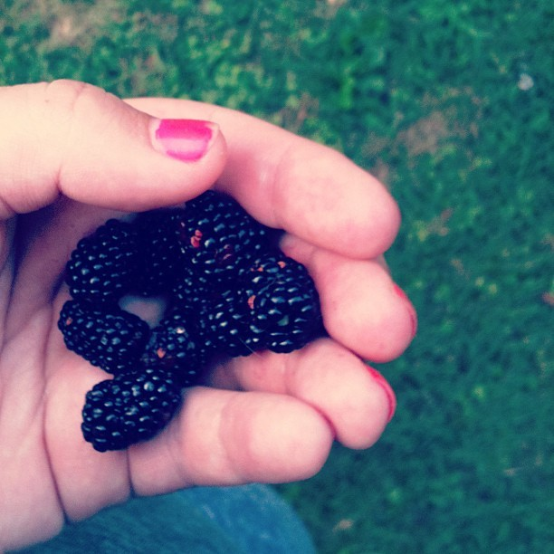 Chipped pink nails. Backyard blackberries. #summer (Taken with Instagram)