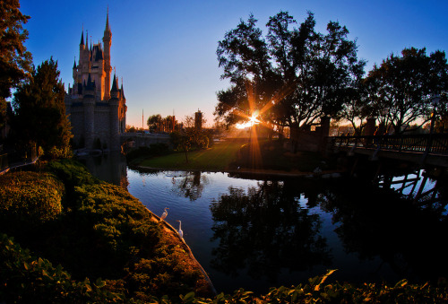 fckyeahdisneyworld:  Cinderella Castle, Magic Kingdom, Walt Disney World