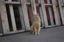 harbour kitty : )