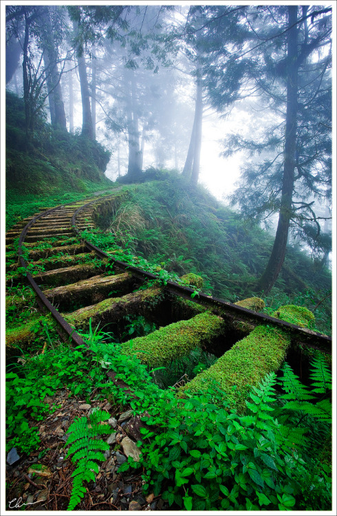 thingssheloves:  Taipinshan National Forest, Taiwan