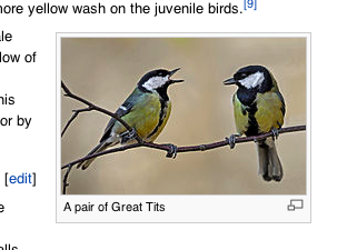 Browsing bird species on Wikipedia can sometimes lead to an amazing discovery.