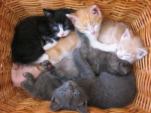 Kittens in a basket (by MarieLynn) ~ Sweet Dreams beautiful friends ♥