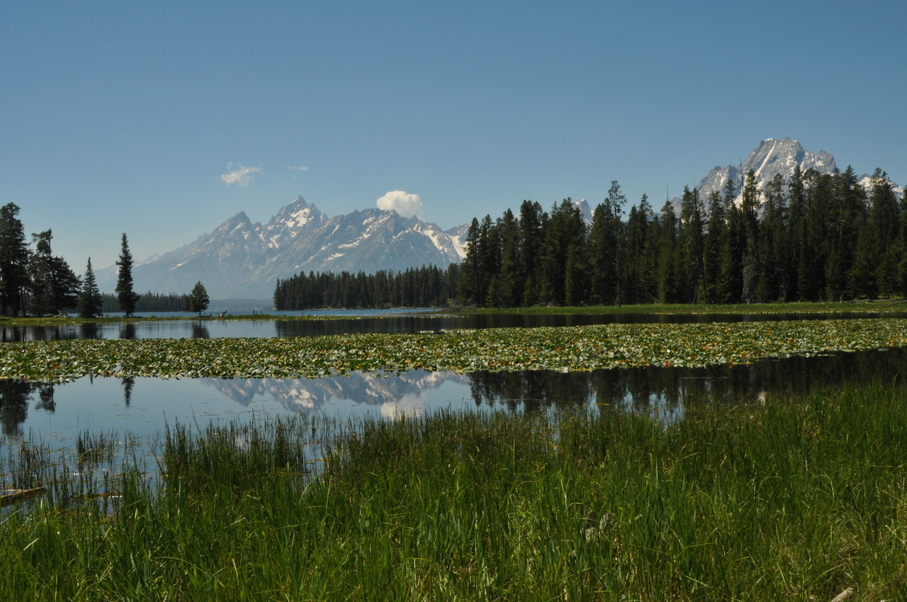 Heron Pond - Colter Bay, Grand Teton National Park This is a short, easy hike that starts from the end of the Colter Bay Parking lot near the marina. It takes you past Heron Pond and then loops back past Swan Lake. Both lakes are covered with lilies, which must be impressive in bloom because they nearly cover the surface of both lakes almost entirely. Heron Pond supposedly is a good place to see moose, although I didn't see any on my hike. Also, if the beavers are active, you can see them working on their home on the shore of Heron Pond.