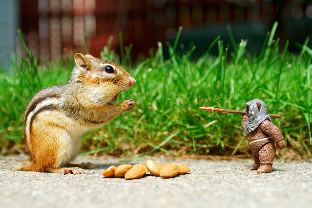 archiemcphee:  Chipmunks are small, striped squirrels with seemingly limitless cheek pouches. Their awesomeness is inversely proportional to their size. Come to think of it, they should probably be wearing underpants as well. Today's theme is a perfect excuse to revisit the work of one of our favourite photographers by posting a couple more photos from Chris McVeigh's awesome series entitled Chipmunk Adventures. (Prints available here) Today is Forest Friends Day on Geyser of Awesome!
