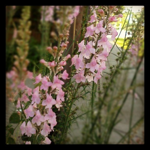 More flora. (Taken with Instagram)