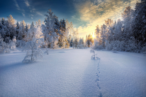 "(""Winter"" by Mikko Lagerstedt)"