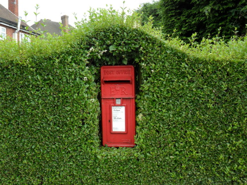 vwcampervan-aldridge:  Red Post box in Privet hedge, Winterley Lane, Rushall, West Midlands