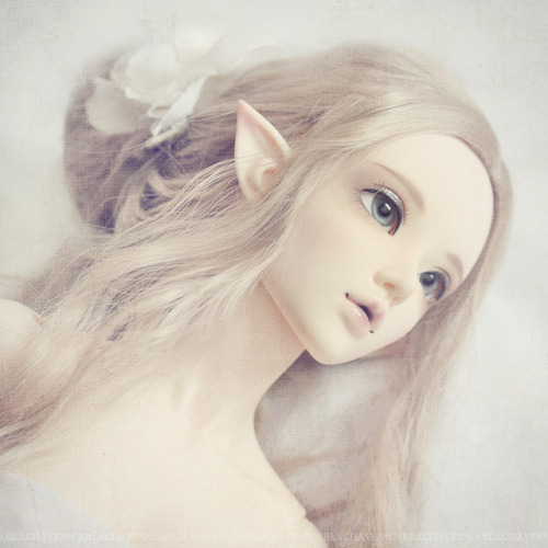postmortems:  BJD Quiz by ♥ ribonita ♥ on Flickr.
