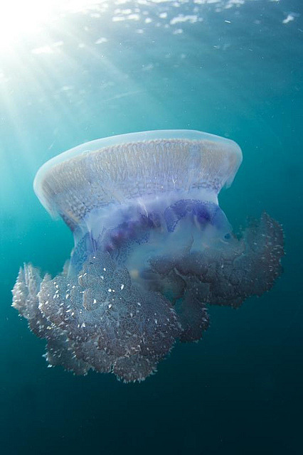 This is our world, and it's beautiful. thelovelyseas:  Jelly Fish by scott1e2310 on Flickr.