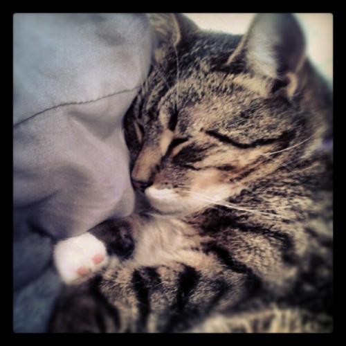 rainy day snuggle bug (Taken with Instagram)
