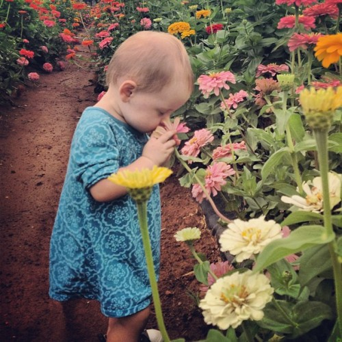 Stopping to smell the flowers.  (Taken with Instagram)