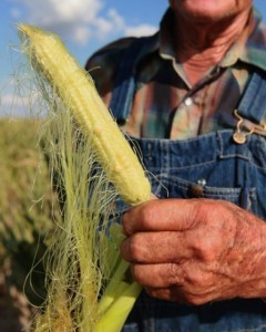 "About 78 percent of U.S. corn and 11 percent of soybean crops are being affected by the nation's largest drought since 1956. The price of corn has risen 38 percent since June 1, while beans have risen 24 percent. As a result dairy, grain, produce, and meat prices are all about to go way up, affecting the price of everything from chicken to ice cream to pizza. The ramifications will likely be felt globally as well. ""The dramatic rise in grain prices in the past few weeks is shaping up to be a serious financial blow for wheat-importing countries,"" a German trader tells the AFP. Has drought put the U.S. food supply at risk?"