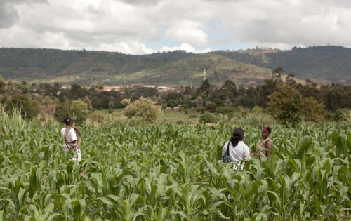 Sales representatives go out into the fields to talk with rural farmers in Kenya, explaining to them how an irrigation pump can increase their crop yield and thus increase their income. Farmers can feed their family, earn a living, save money, and invest in better education and health. Learn more at www.theadventureproject.org.