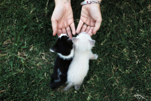 cuckoocl0ck:  IMG_1473 by Amanda Jo Flinn on Flickr.
