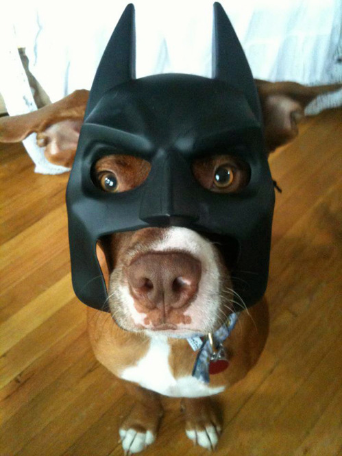 The Bark Knight