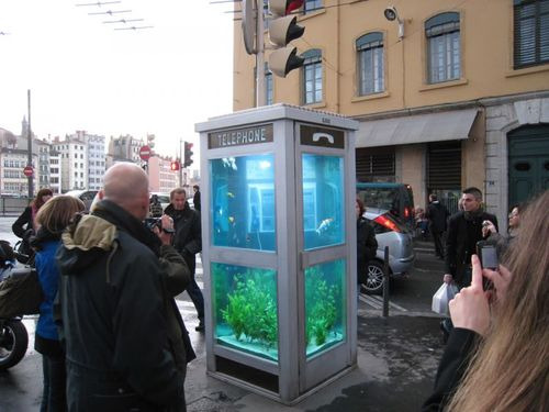 Phone Booth Aquarium by Benoit Deseille & Benedetto Bufalino