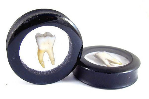 olive-elf:  Human Molar plugs