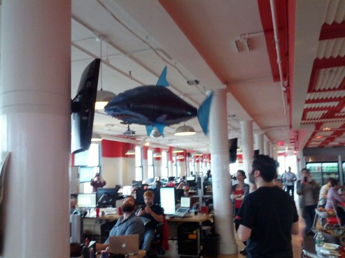makingmeetup:  A shark flew into the office today to celebrate our upcoming feature release…