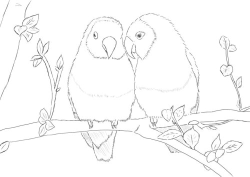 Parrots - Lineart by ~Phoenixa86 My lineart lovebirds after in color :)