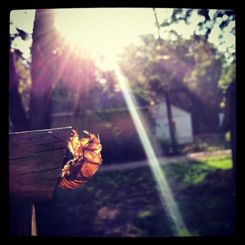 Cicada (Taken with Instagram)