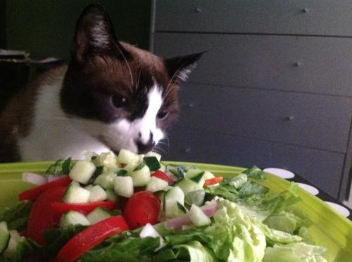 get away from that cat. you don't like salad. if you want to succeed at this diet you must eat things you actually like…and can digest.