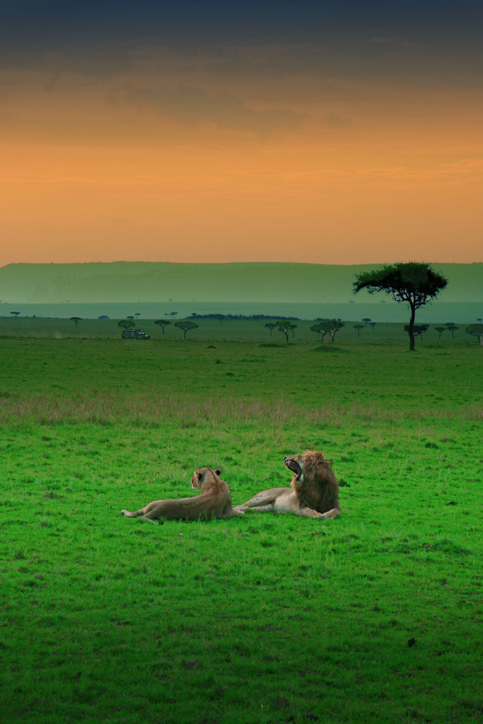 divinecosmicbeing:  This is now my favorite Lion and Lionist Picture!