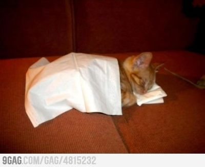 9gag:  Kitty + Tissues = Cuteness over 9000
