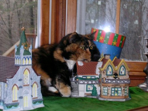 Pickle: coming soon to sit on a small holiday village near you.   It's calico-zilla!