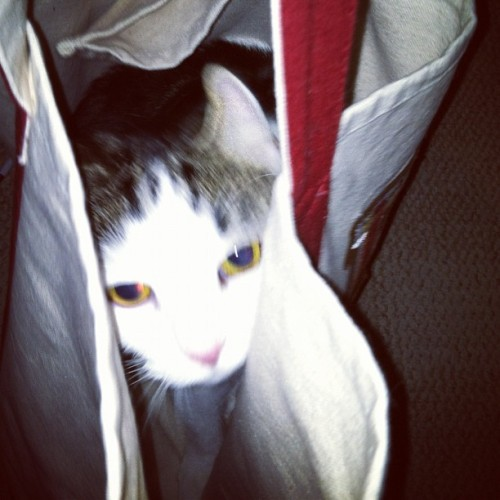 grenadeinagarden:  Kitty in a bag (Taken with Instagram)