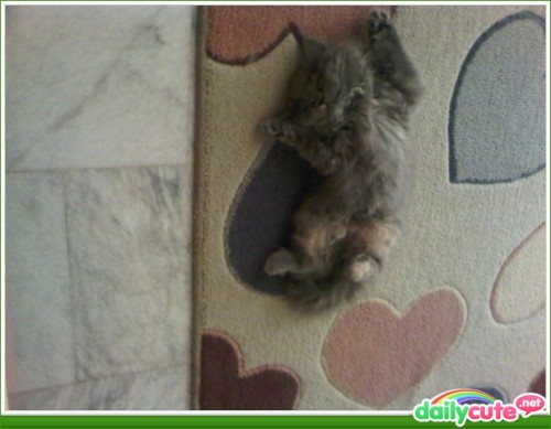 I sleep cute! http://bit.ly/MQeKro