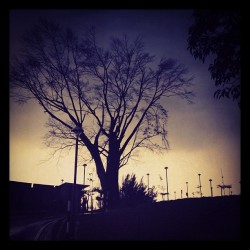 Apocalyptic #tree #sillhouette #sunset (Taken with Instagram)