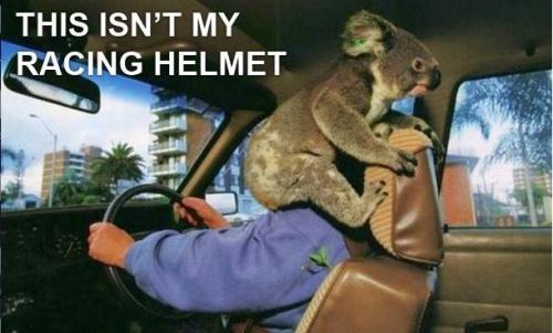 fuckyeahdementia:  A koala helmet [these aren't my glasses : via]