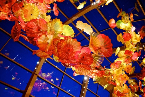 Inside the Chihuly Garden.