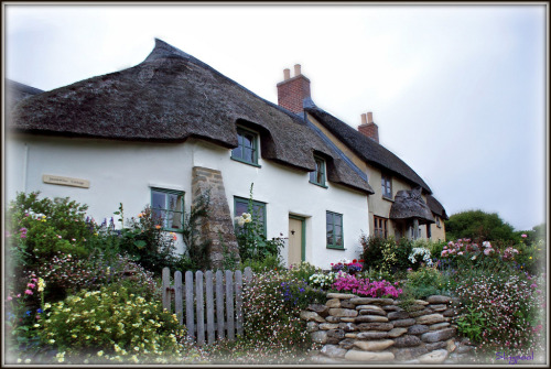 joilieder:  Jessmine Cottage - a thatched roof cottage in Eyre, Dorset, England.  Photo by Slingpool.