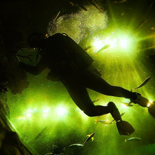dive under the lights. (來自 Instagram)