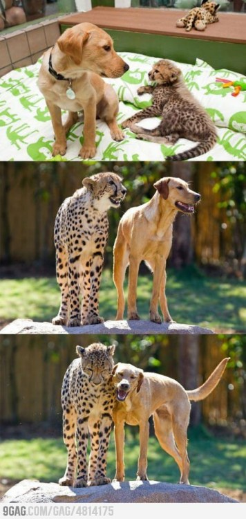 9gag:  Best Friend Forever!