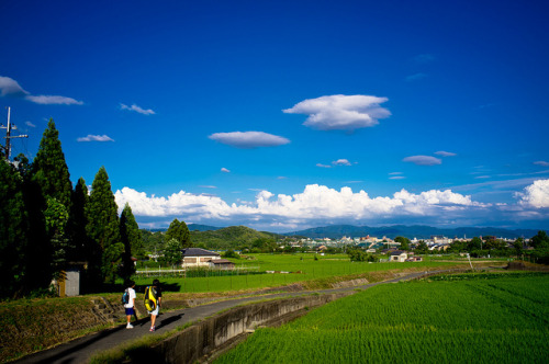 ready for the harvest (Kitasaga, Kyoto) by Marser on Flickr.