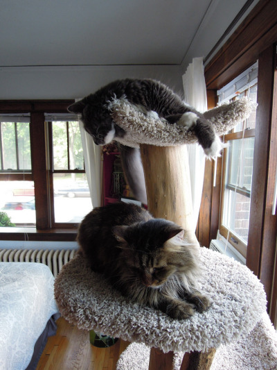 Cat Tree (by dmd.hashw)