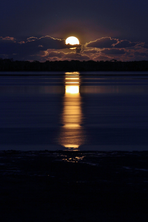 sop-h:  ignite—thenight:  Well be under the moonlight