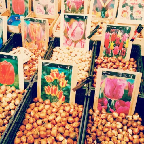Flower market #eurogram  (Taken with Instagram at Bloemenmarkt)