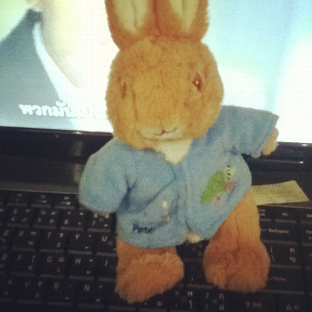 peter rabbit >*<  (Taken with Instagram)