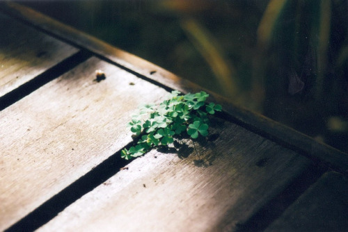 weed. by chang ming's soap on Flickr.